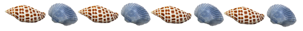 junonia-blue-shells